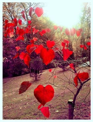 heart-love-hearts-nature-flowers-hearts-tags-misc_large5